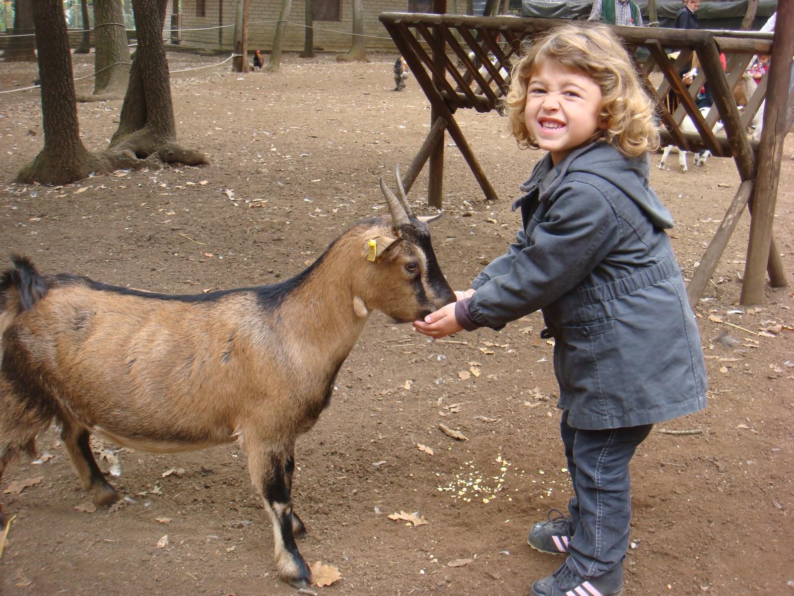 Bambini di roma pic nic tra gli animali della fattoria for Foto di fattoria moderna