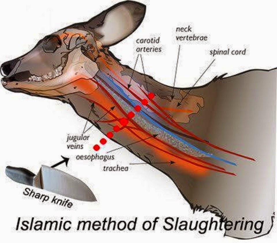 Cara Peneyembelihan Haiwan Dalam Islam