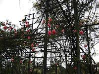 Entrada al Rosedal rosas estructura hierro