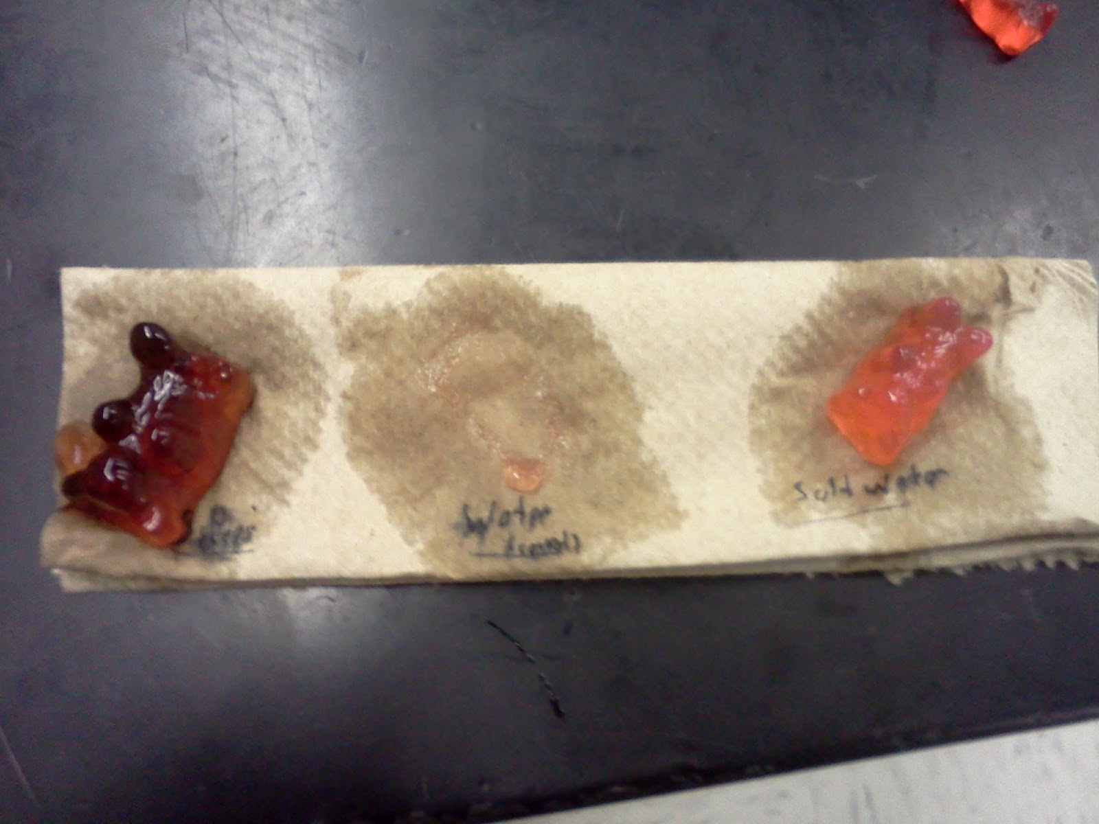 gummy bear lab Gummy bear lab or any similar topic specifically for you sources of error the expected results of the lab were that the gummy bear dissolves in the water getting smaller, not larger.
