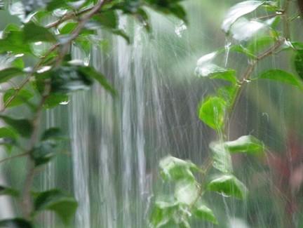 Macetohuerto paso a paso aprender a regar plantas en maceta - Recoger agua lluvia ...
