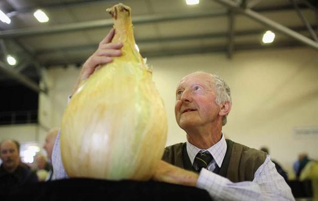 Maior cebola do mundo pela mais de 8 quilos