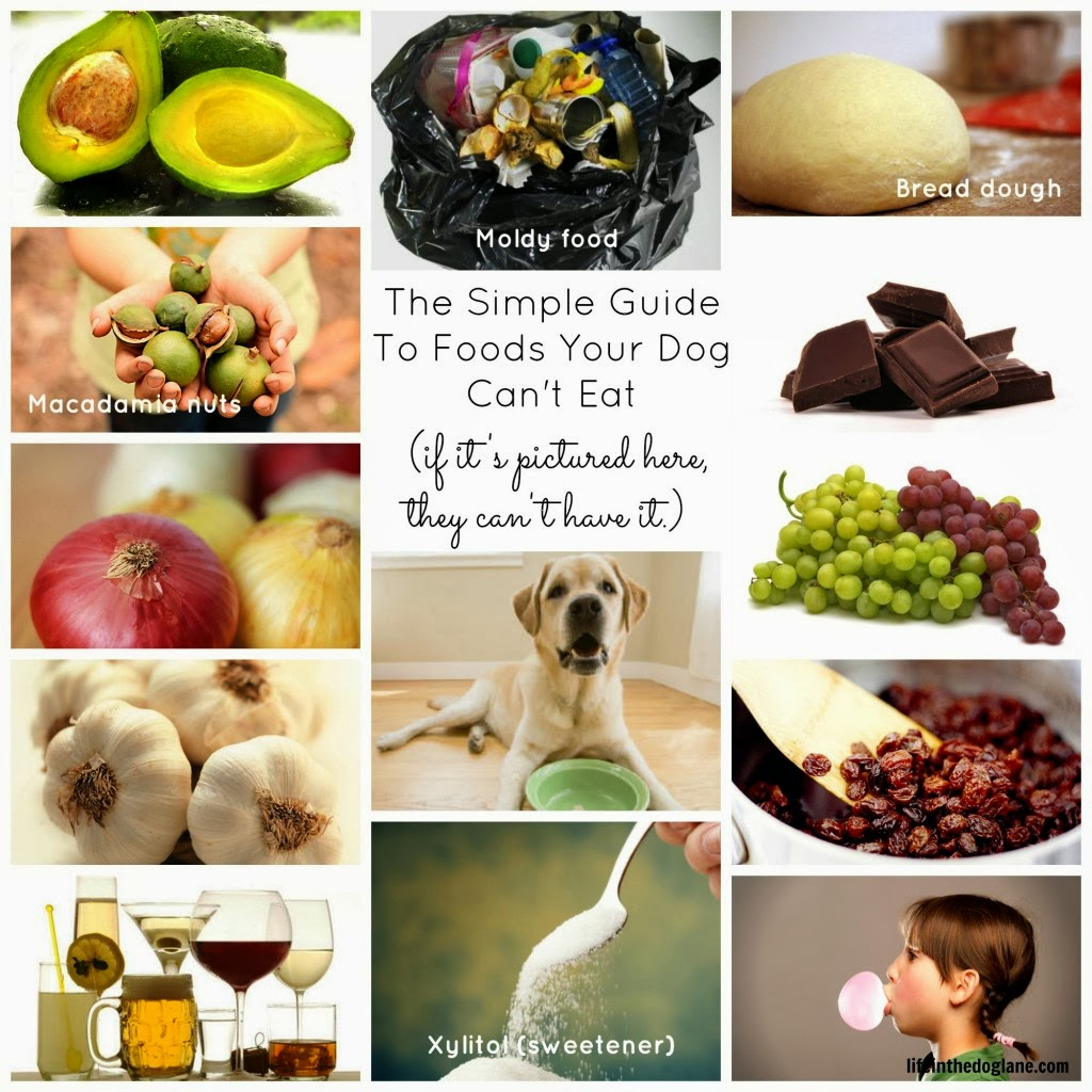 Bummerina: People food that are great for Dogs
