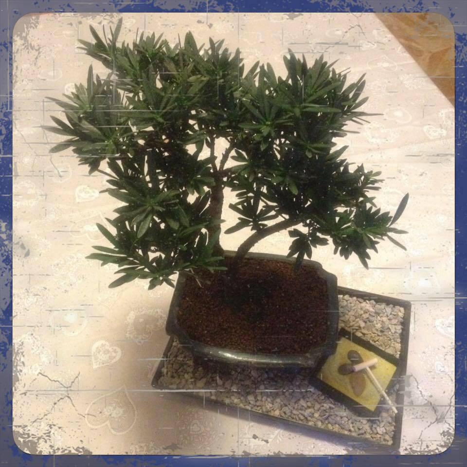 2016.02 bonsai