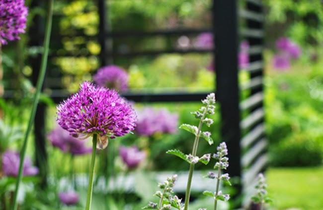 Sort trækonstruktion og løgblomster i den stramme haveplan