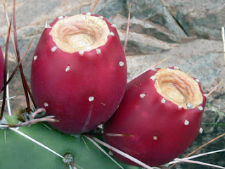 Nopal cactus is sweet like ripe papaya.