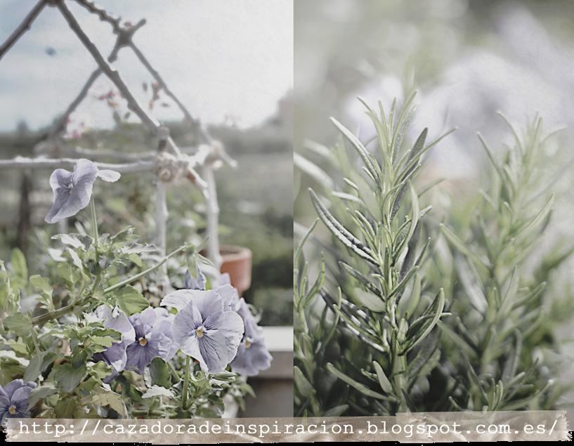 aromatic herbs, terrace, still life, http://cazadoradeinspiracion.blogspot.com.es/
