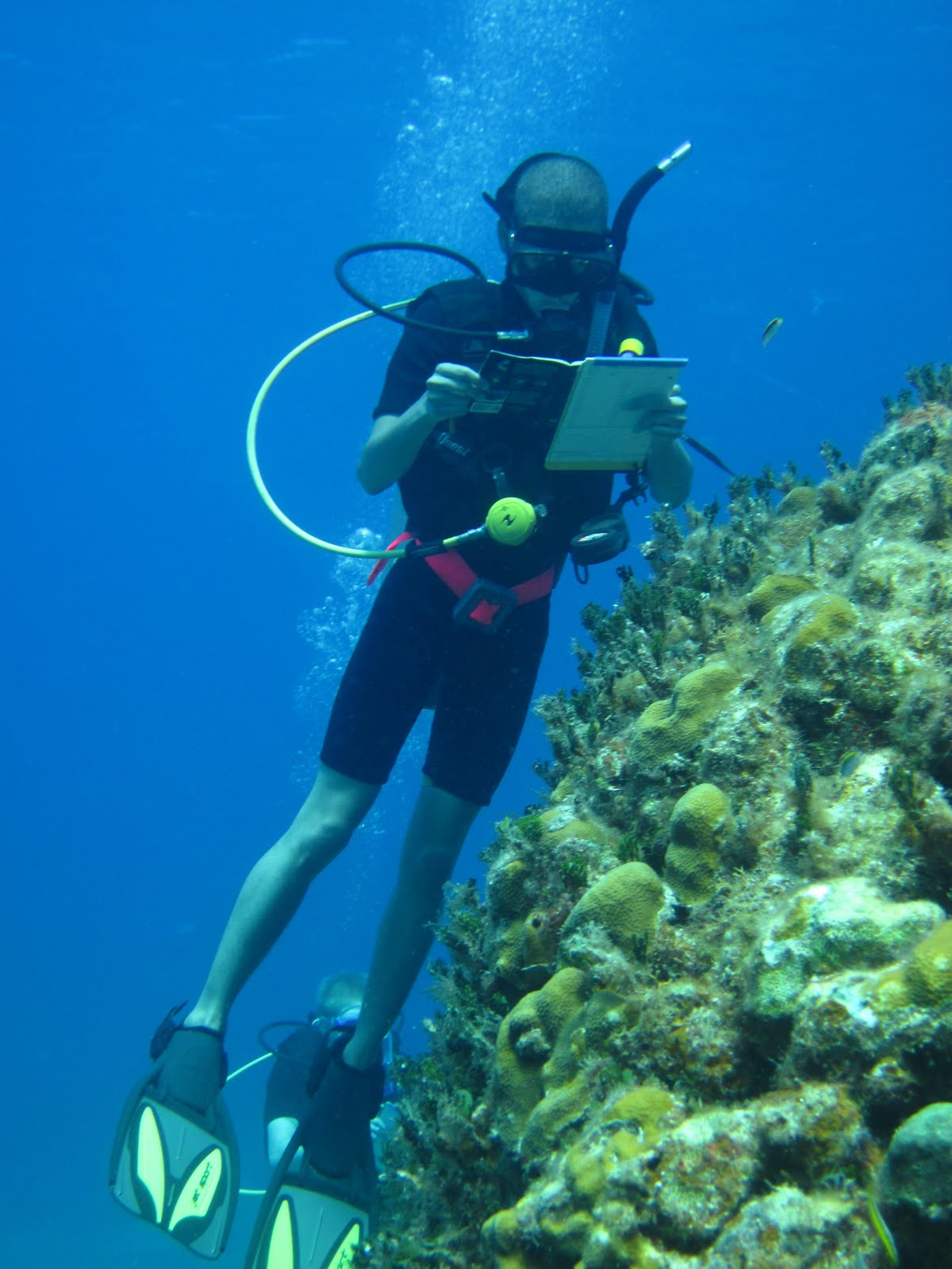 Giant ocean tank divers blog josh identifying animals underwater for a reef reef environmental education foundation fish survey xflitez Images