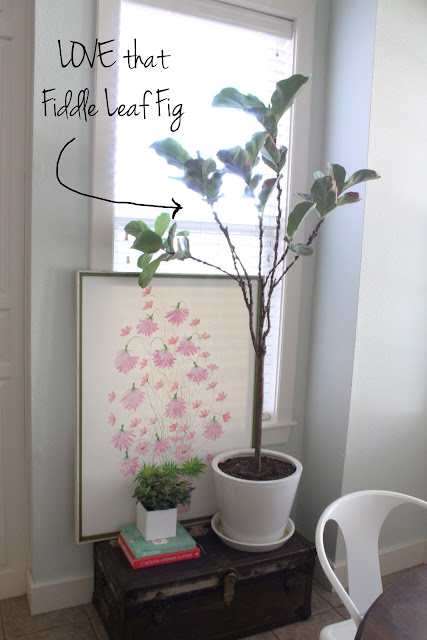 Fiddle leaf fig tree, Art in the kitchen, twine interiors, open shelves, vintage dishes, shelf styling, kitchen styling