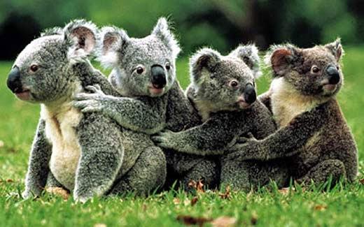 miś koala, podróż do japonii, Baśnie na warsztacie, dzieci i podróże, Klub latających podróżników, Mateusz Świstak, MEK, Muzeum Etnograficzne, Warsztaty dla dzieci,