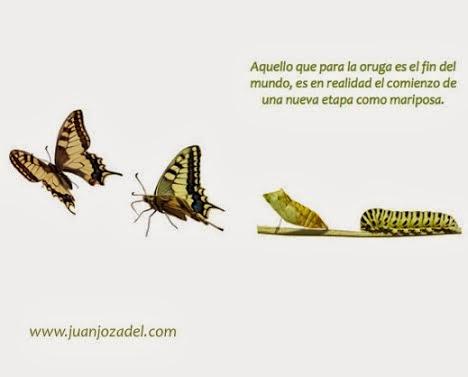 oruga y mariposa
