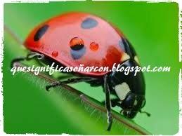 los insectos en nuestros sueños