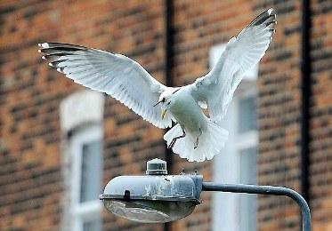 Kehalalan Burung Yang Dipanah