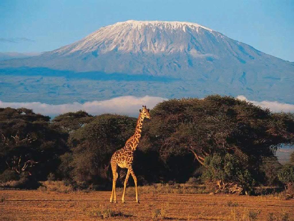 África guiada Vacaciones de Safari, Tours y Paquetes de Vacaciones, Viajes a destinos escapada de vida silvestre en
