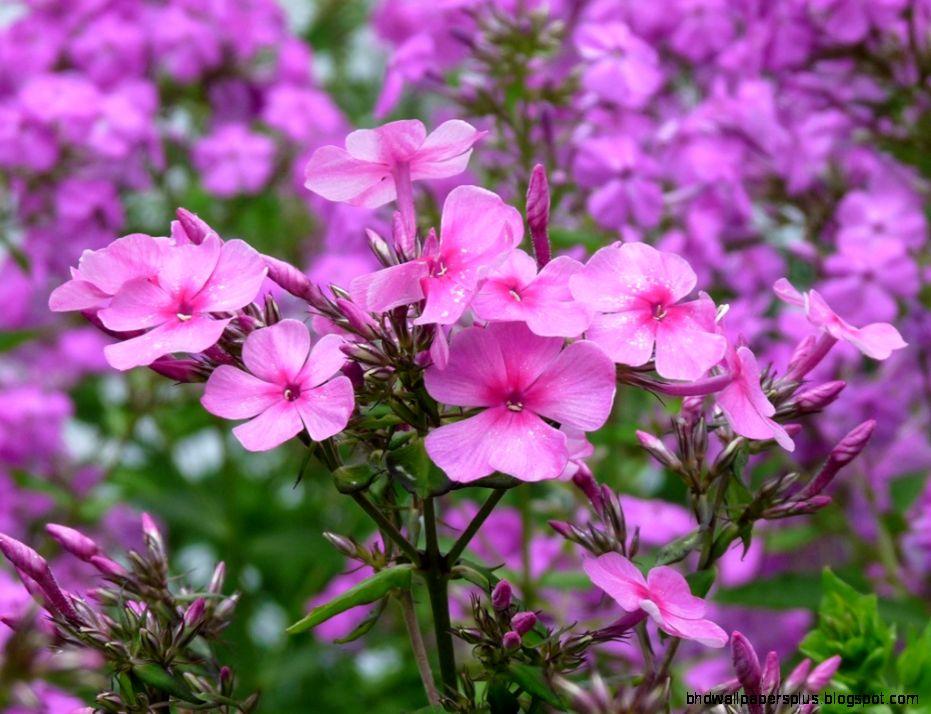 Perennial Flowers 6902810
