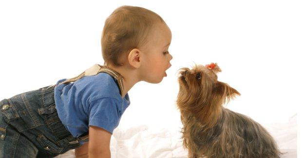 the-best-dog-breeds-for-children