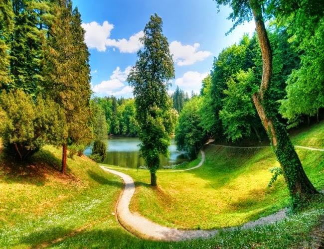 arboles hermosos fotos de naturaleza animales paisajes