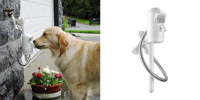 WaterDog: Água fresca para cachorro