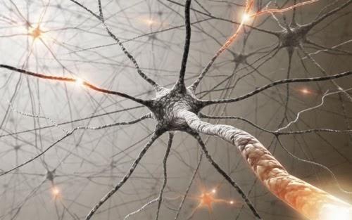 nerve impuls