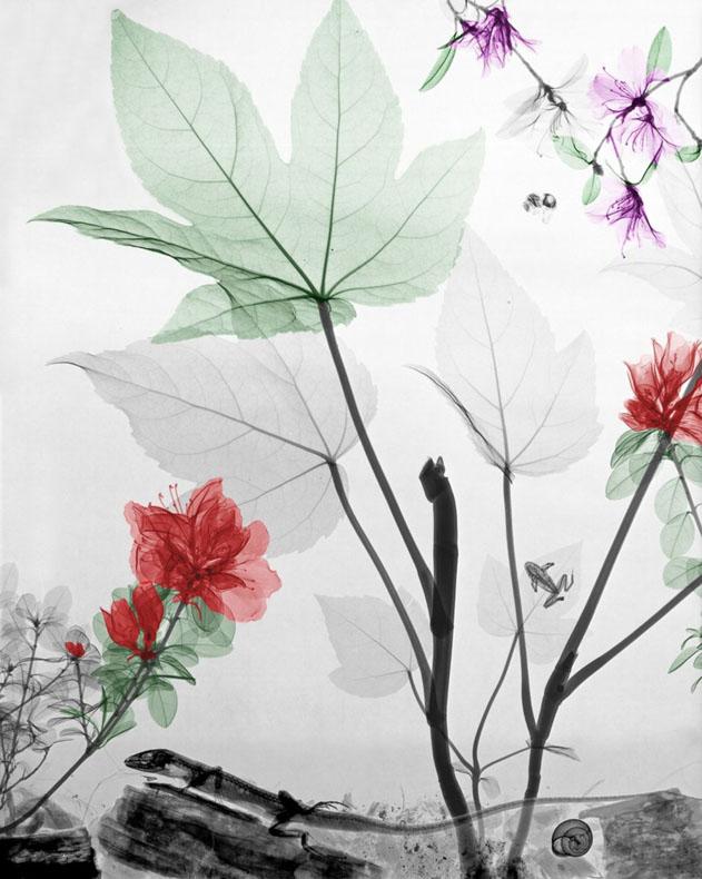 Físico colorea imagen rayos X naturaleza