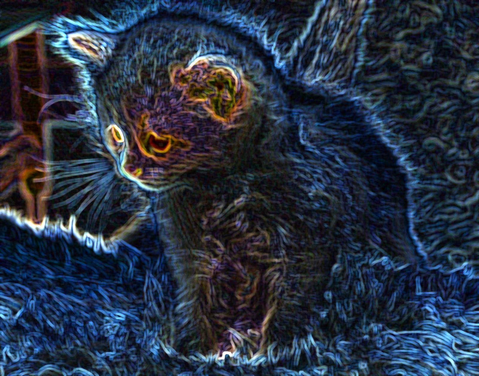 пушистый милый зверь - кот