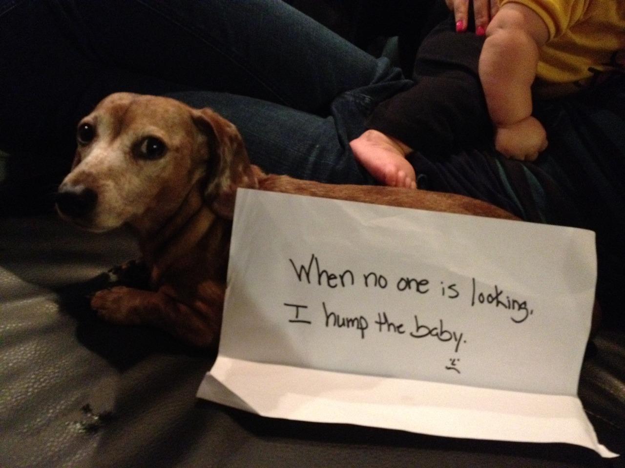Mindless Drivel Makes Me Giggle: Dog shaming...