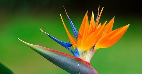 نمو زهور ونباتات بشكل متناظر ومنسق يجعل منها مرآة تعكس جمال الطبيعة وعظمة خالقها سبحانه