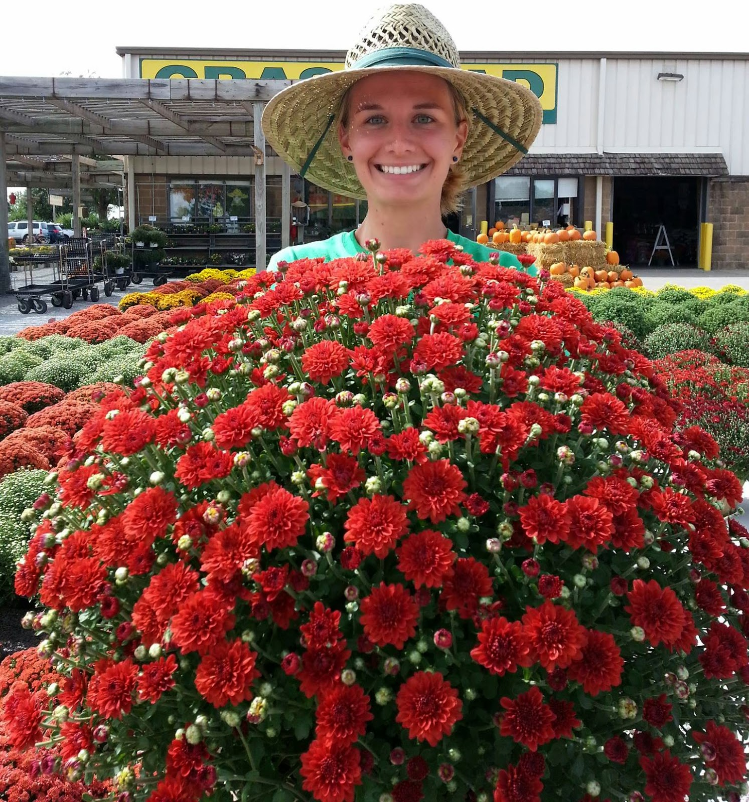 Revive Worn Out Planters And Flower Beds Using Colorful Fall Blooming Garden  Mums. Fresh Hardy Garden Mums In Brilliant Yellow, Oranges, Pinks, ...