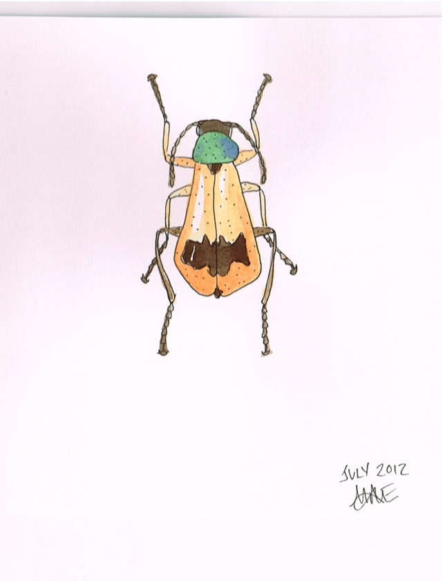 Daily Draw Three Soft Winged Flower Beetles