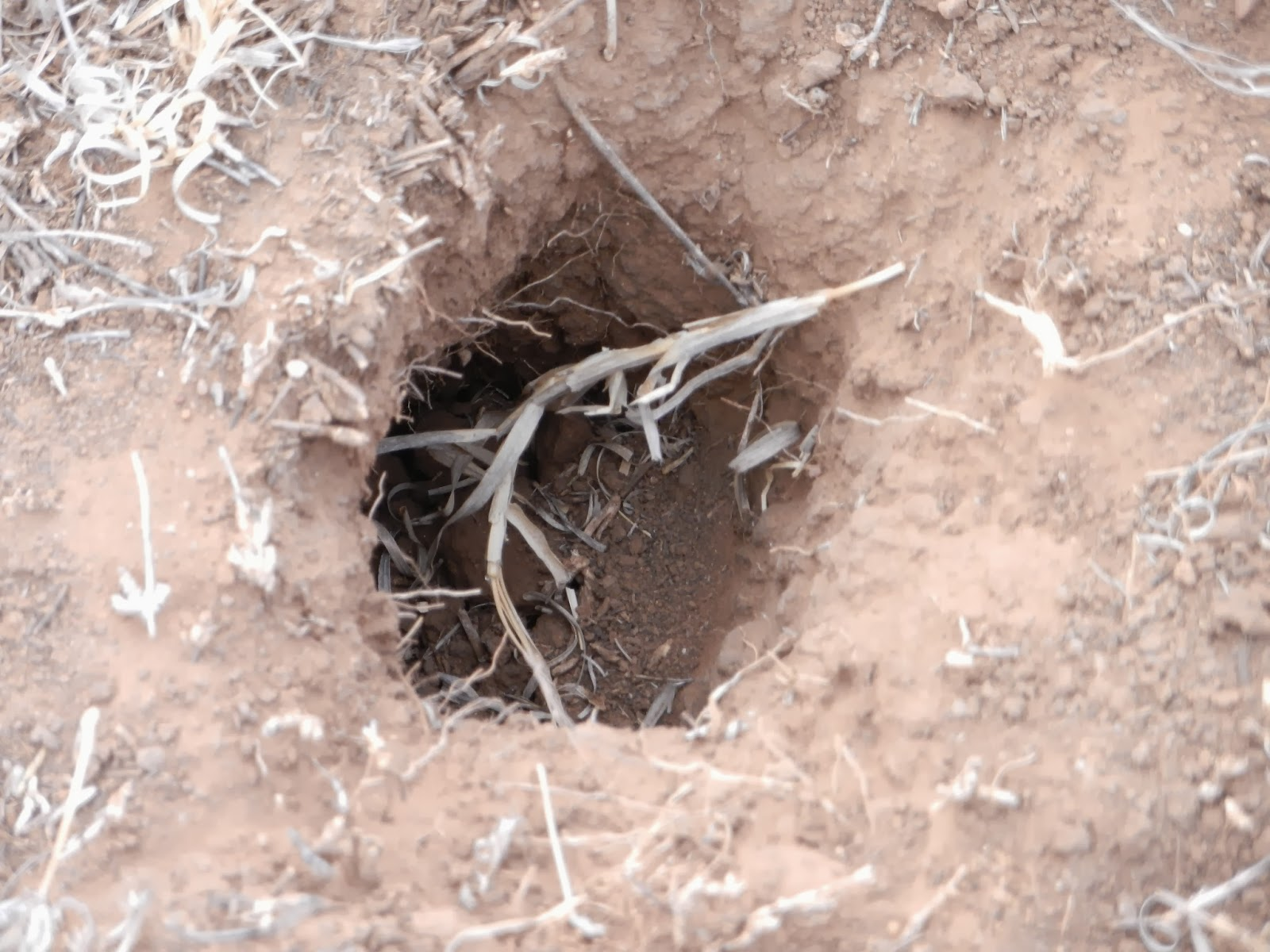 prairie dog hole