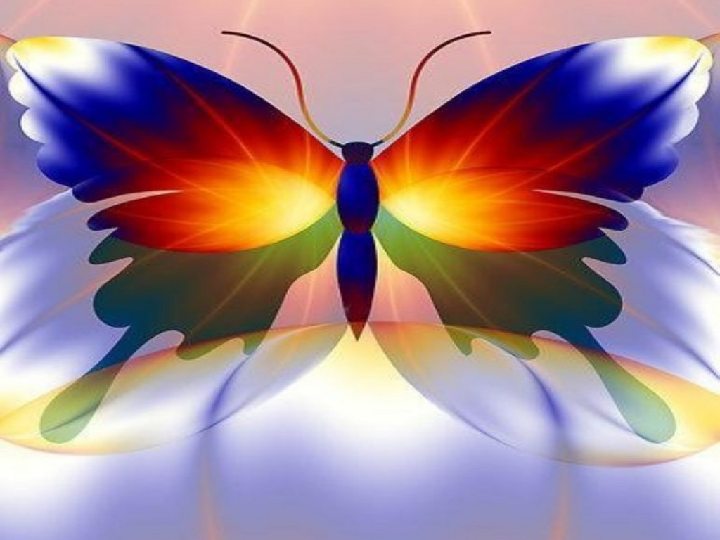 colorful butterfly close   up