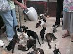 Rebecca's Cats