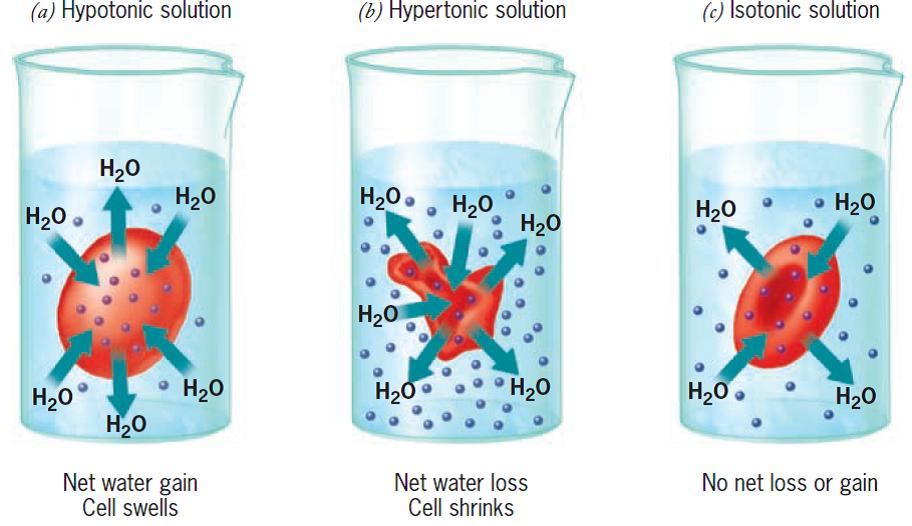 Ciencias de joseleg difusi n de agua a trav s de la - Agua de osmosis ...