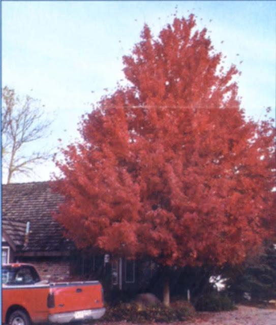 Autumn Blaze5