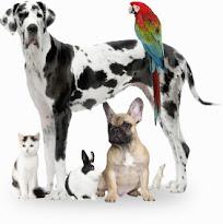 Mes de los Animalitos y Medicina Veterinaria