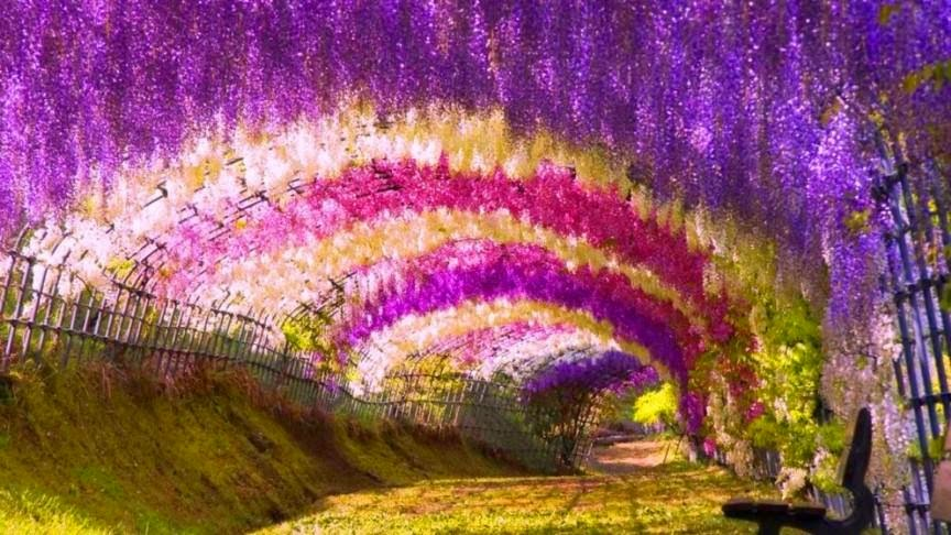 Terowongan Bunga Wisteria
