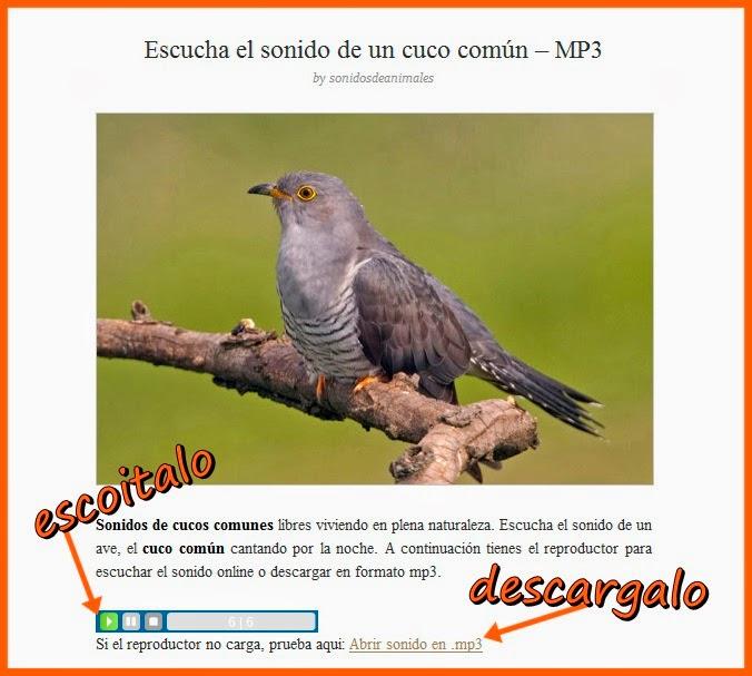 http://sonidosdeanimales.net/escucha-el-sonido-de-un-cuco-comun-mp3/