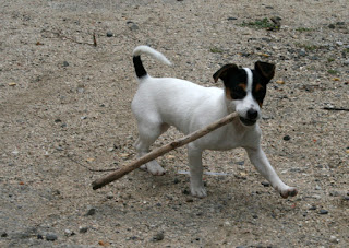 Look at my stick!