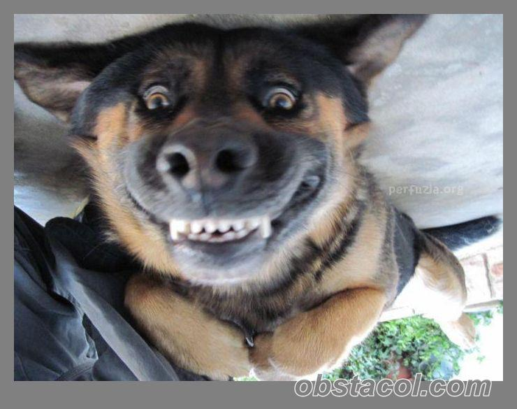 Funny Picture Clip: Funny animal pictures with captions ...