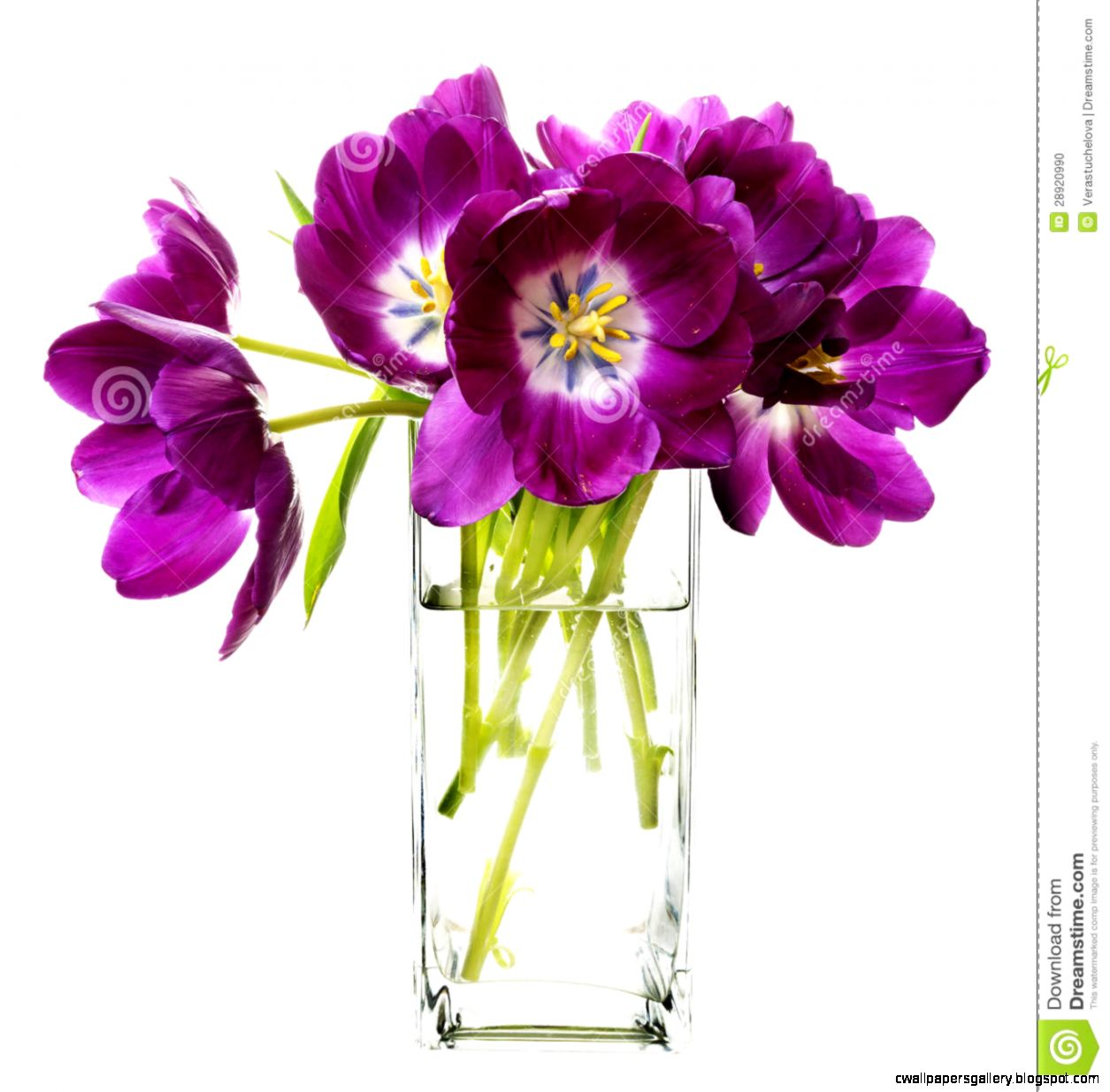 Bunch Of Purple Tulips In Vase Stock Photo   Image 28920990