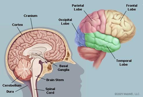 Membuang Racun Dalam Otak