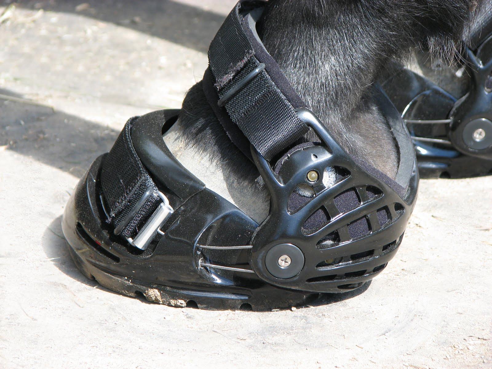 Lifeu0026#39;s A Beach Shoes Vs. Boots...