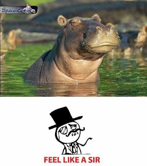 funny animals hippo picture