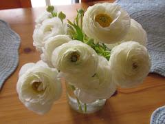 لولا الزهور لما عرفنا رائحة السعادة