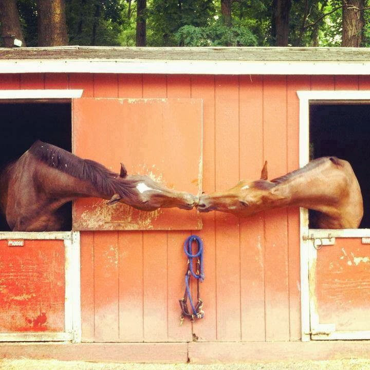 Caballos besandose en el establo