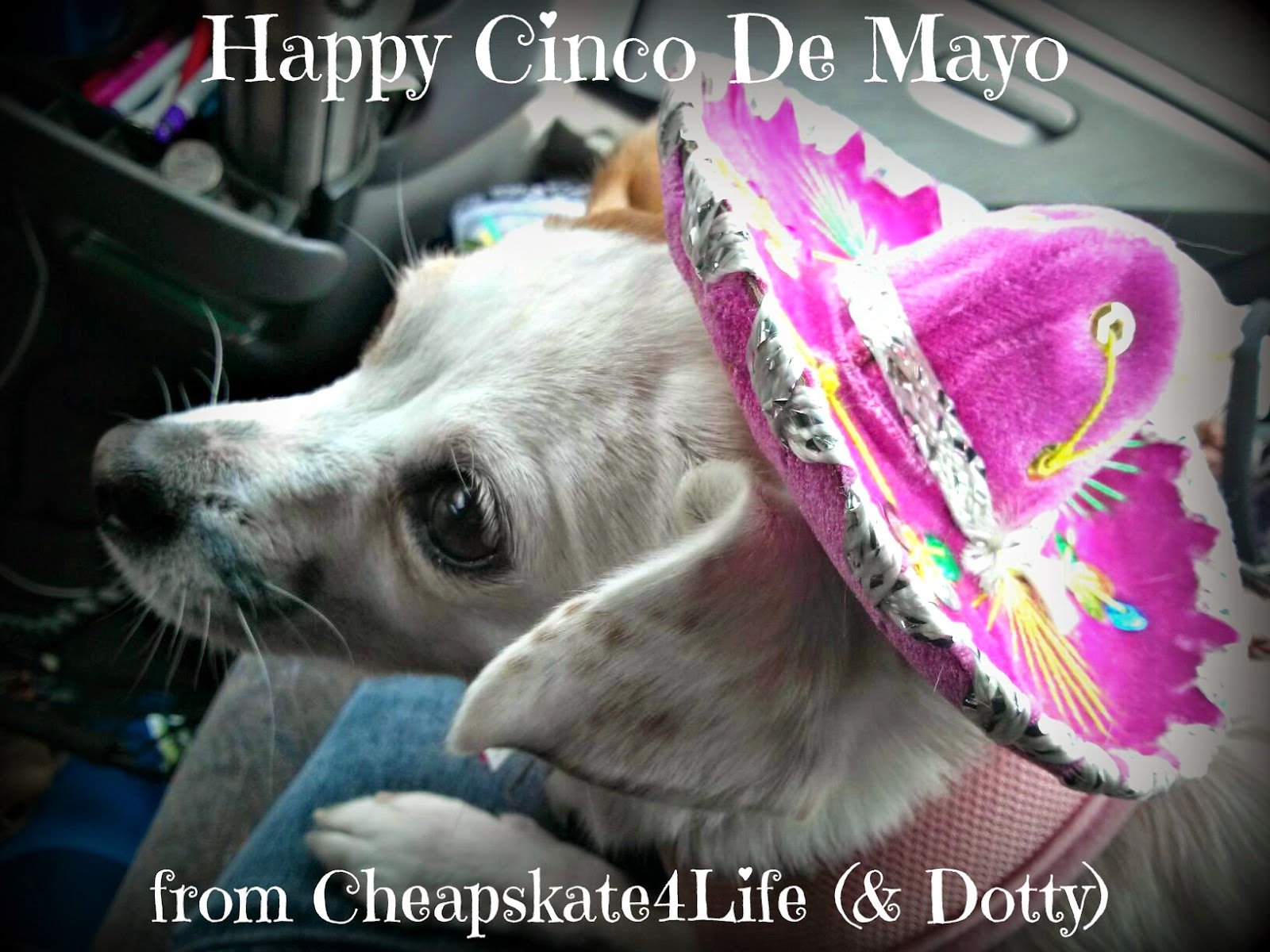 Happy Cinco De Mayo - Dog Costume