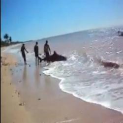 Banhista flagra captura de tubarão na praia da Penha PB