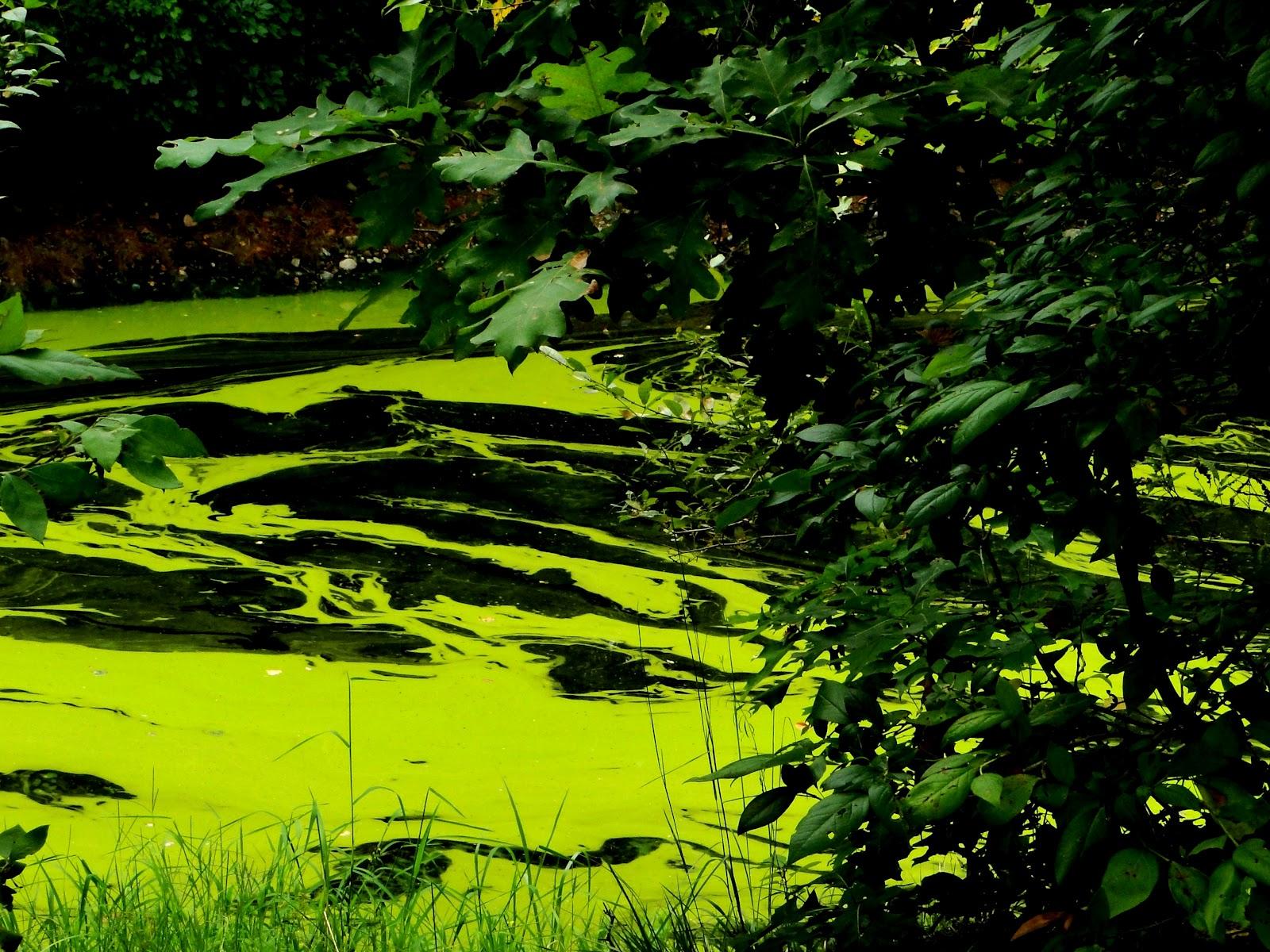 http://3.bp.blogspot.com/-c8SujAbxpAc/UD5aQYCBxoI/AAAAAAAADrc/EBO8Jwk12aA/s1600/Plankton%2Balgae.JPG