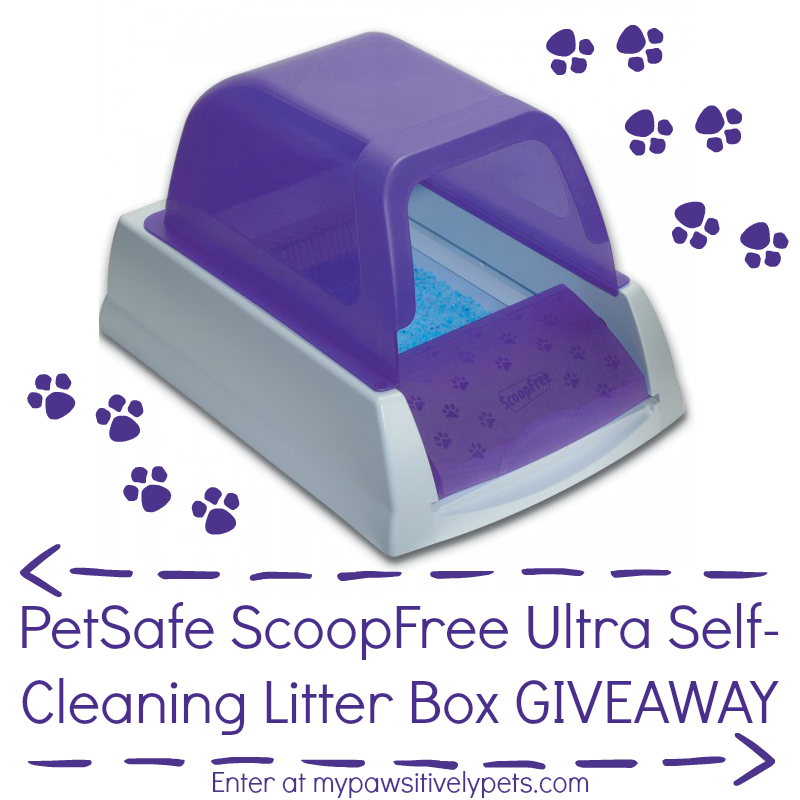 we are partnering with petsafe to bring you a fabulous giveaway one lucky person will win a petsafe scoopfree ultra litter box in purple - Scoopfree Litter Box