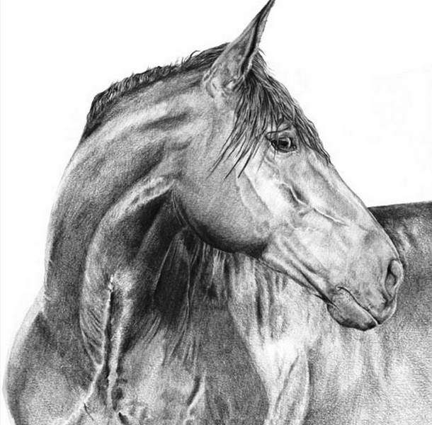 Tutorial de Dibujo - Cara de caballo / Horse face - YouTube